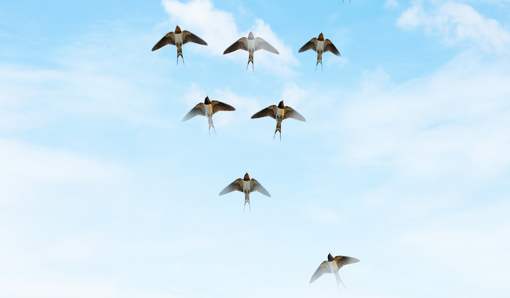 Backwards v-formation of birds. Credit: Alvaro Dominguez