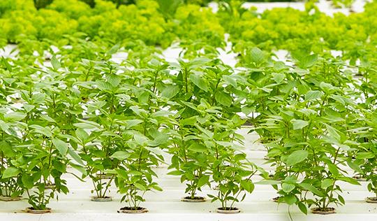 Future Farms
