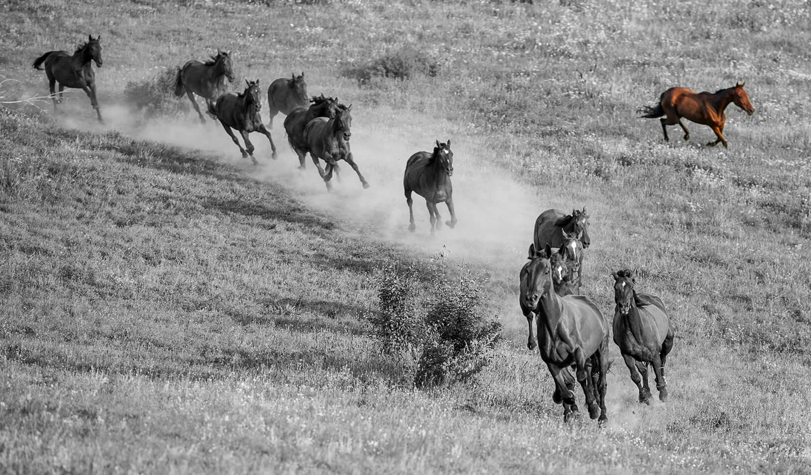 Horses running down a hill, one going the opposite direction