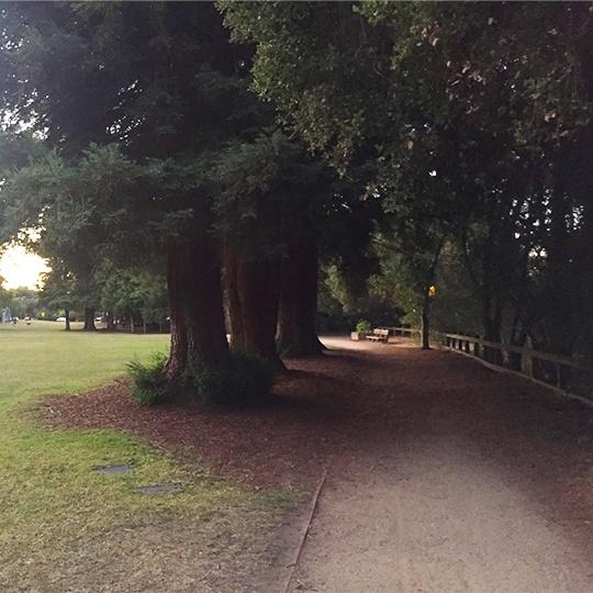 Outdoor tree lined walkway