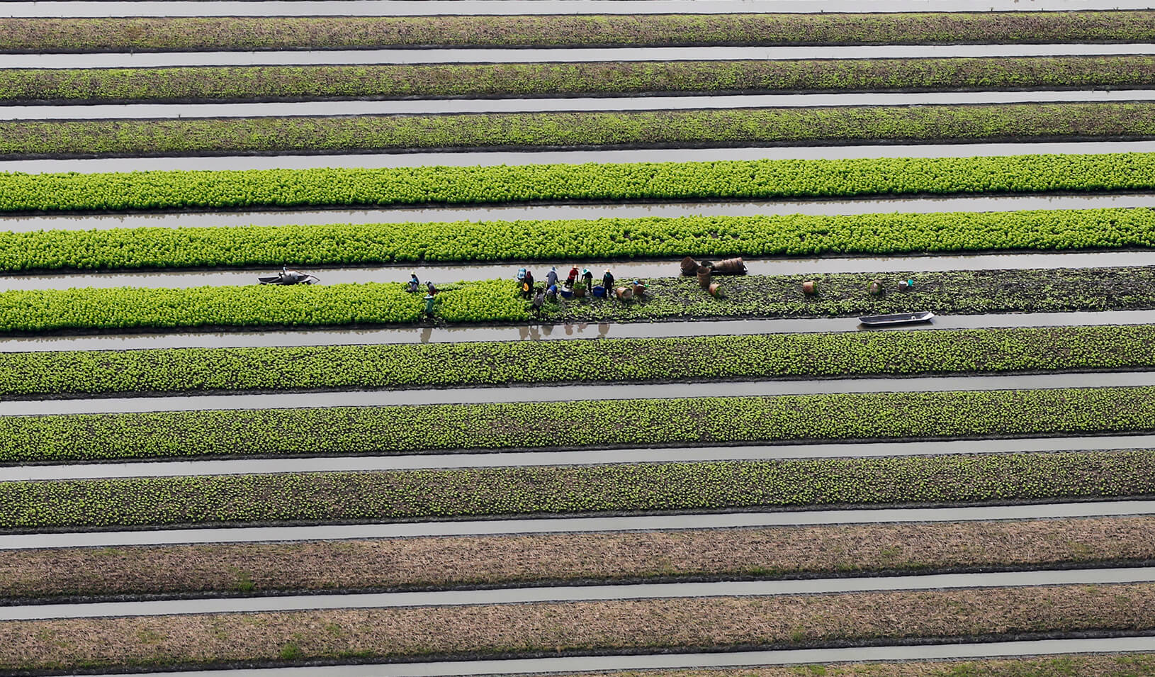 Farmers work in their vegetable field. | Reuters/Chaiwat Subprasom