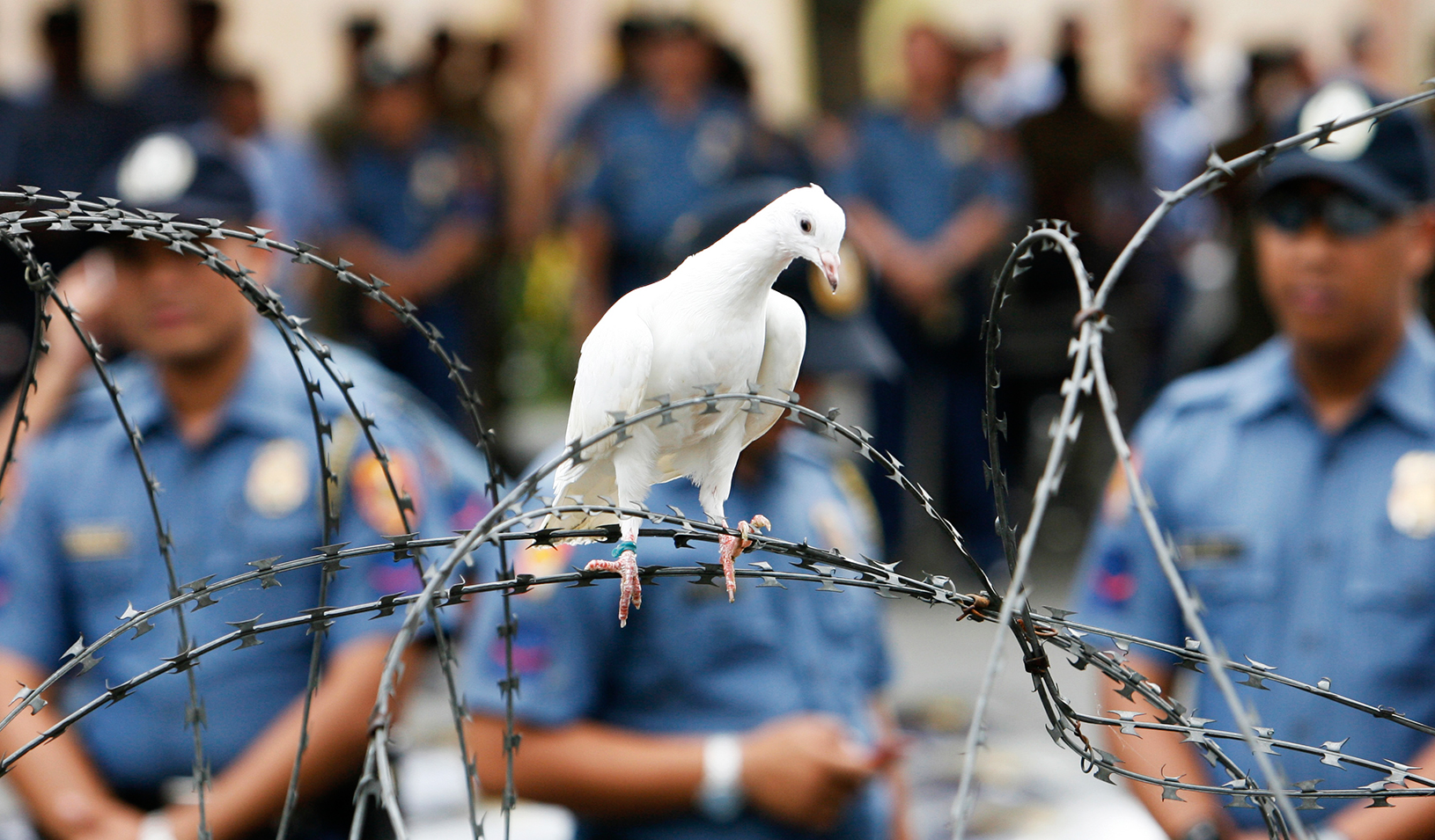 A dove lands on barbed wire during a protest outside the presidential palace in Manila in 2008 | Reuters/Romeo Ranoco