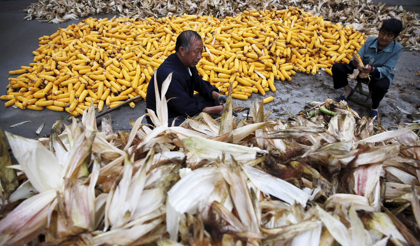 Farmers husk corn at a farm village in China. | Reuters/Kim Kyung-Hoon