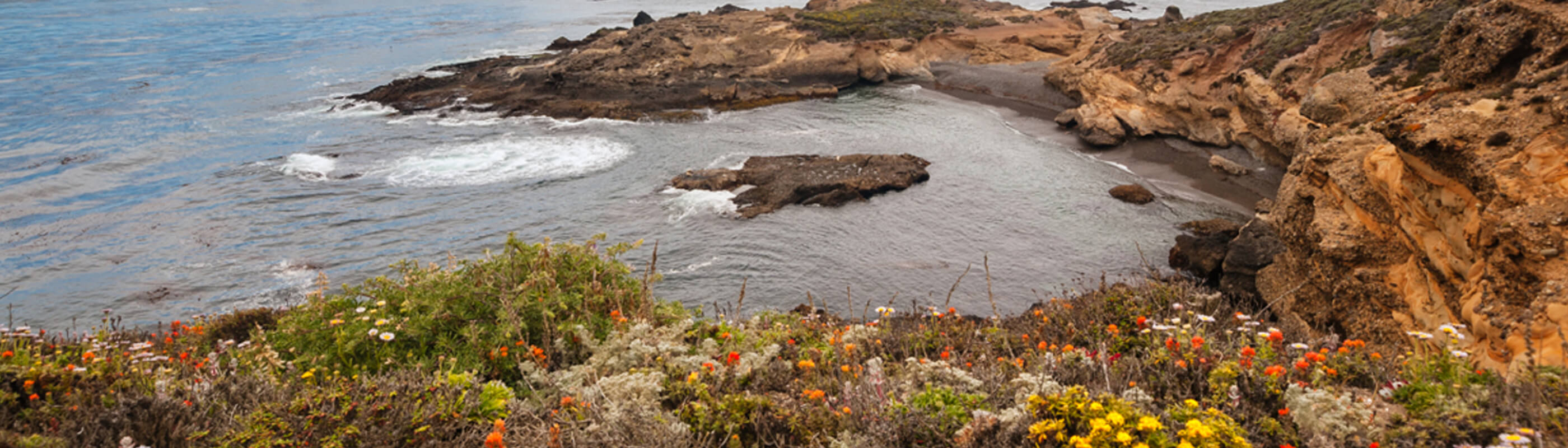 Photo of Point Lobos coast