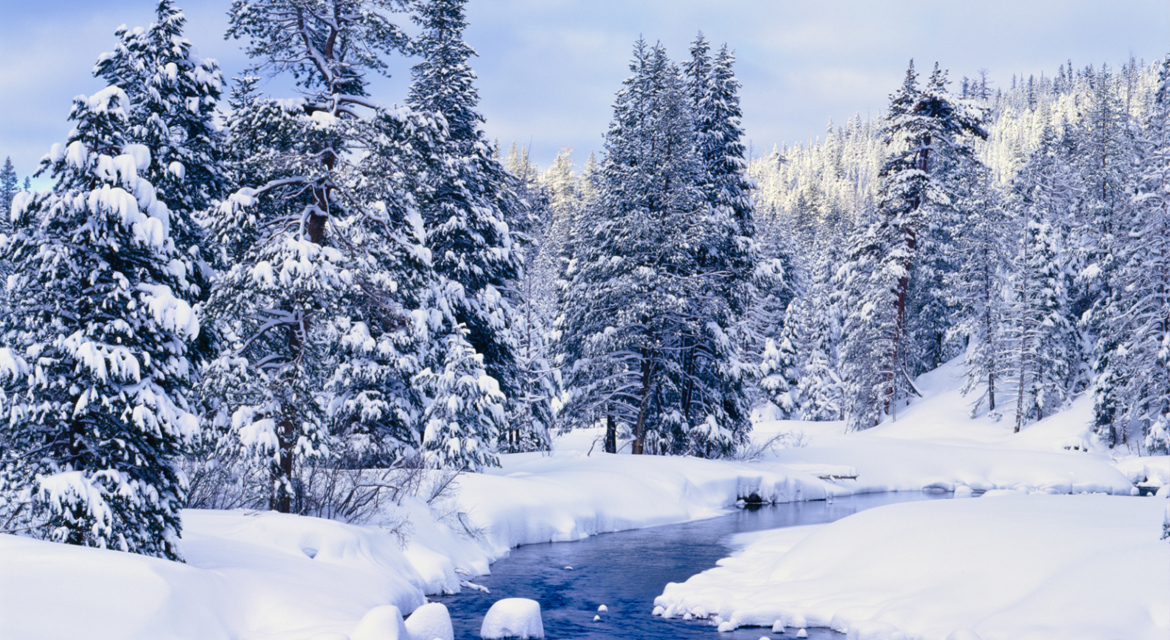 Evergreen trees and small creek in winter