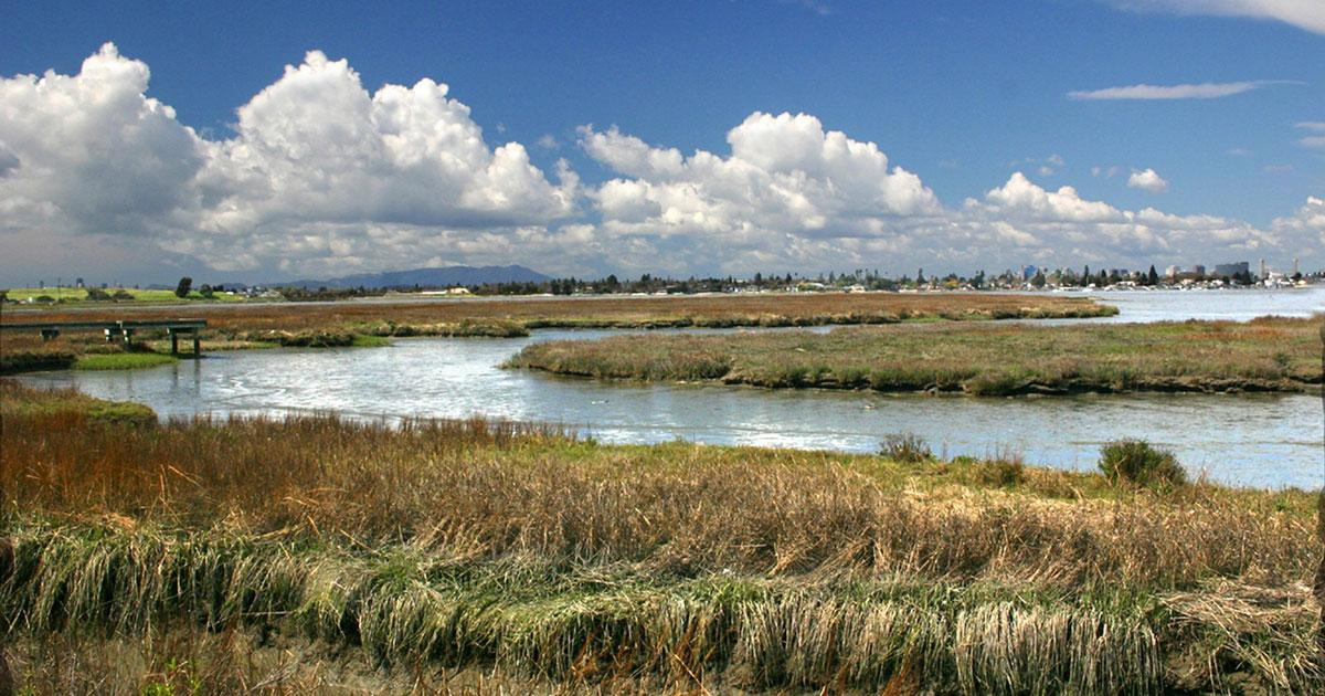 A sunny day at beautiful wetlands in the San Francisco Bay Area.