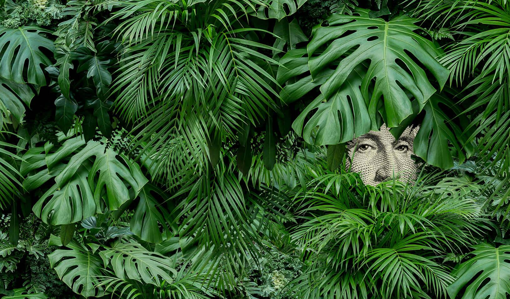 Illustration of George Washington on the Dollar bill peeking through some bushes. Credit: Alvaro Dominguez