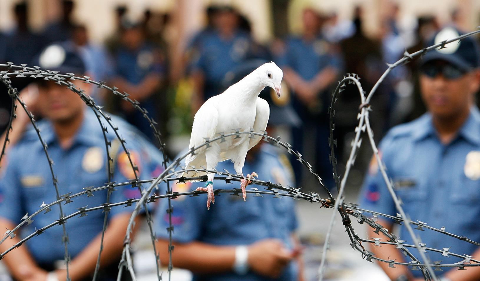 A dove lands on barbed wire during a protest outside the presidential palace in Manila in 2008