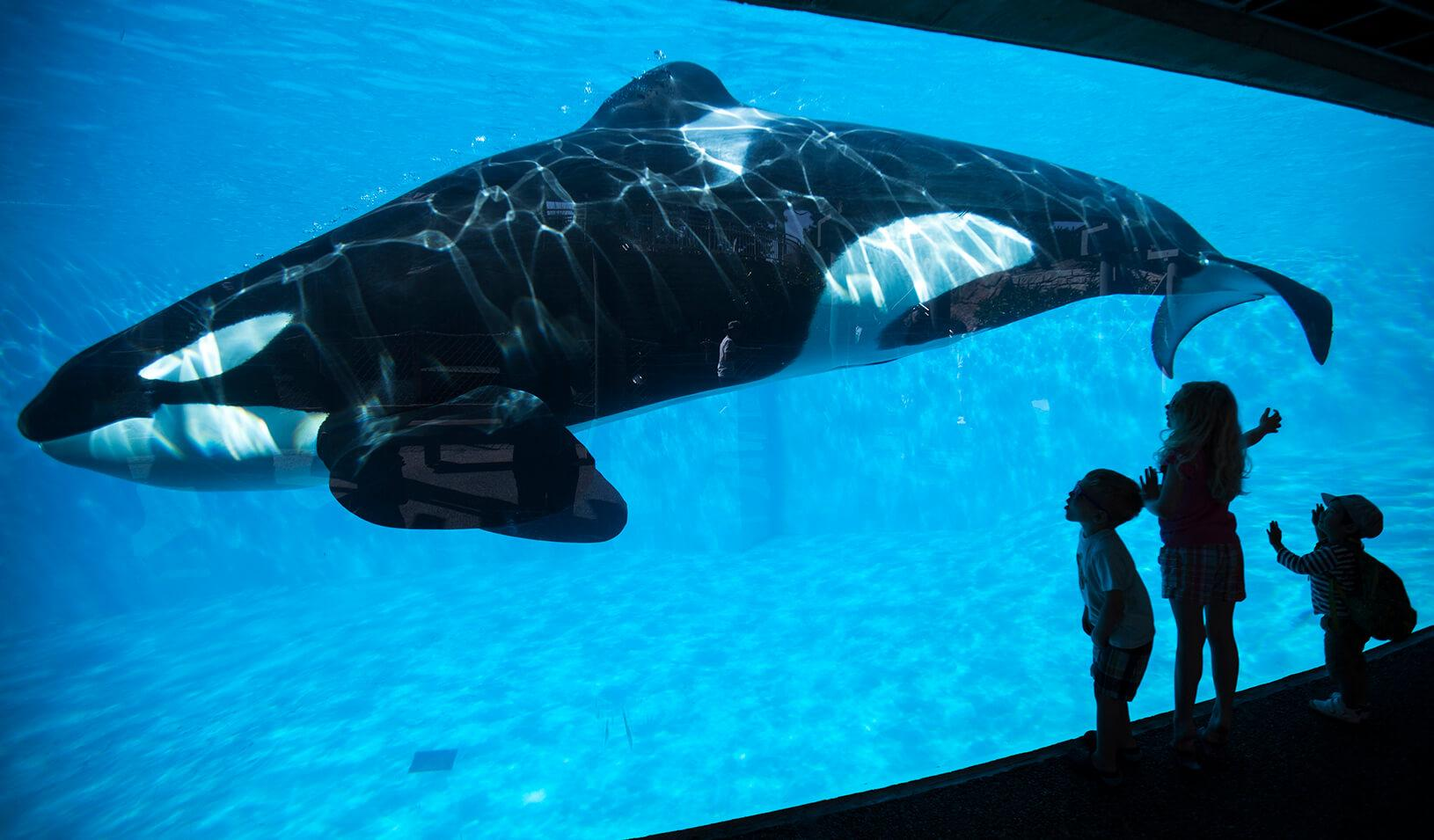 Young children get a close-up view of an Orca killer whale during a visit to the animal theme park SeaWorld in San Diego | Reuters/Mike Blake