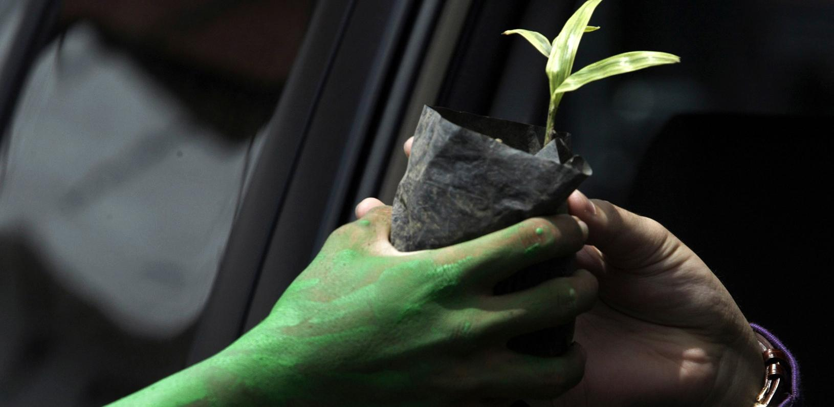An environmental activist with green paint on his hand gives a plant to a car driver