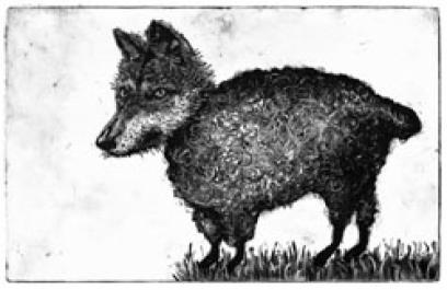 Illustration of a fuzzy wolf